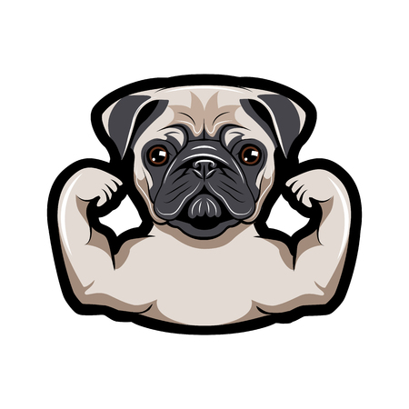 Pug dog with muscles. Vector illustration isolated on white background.