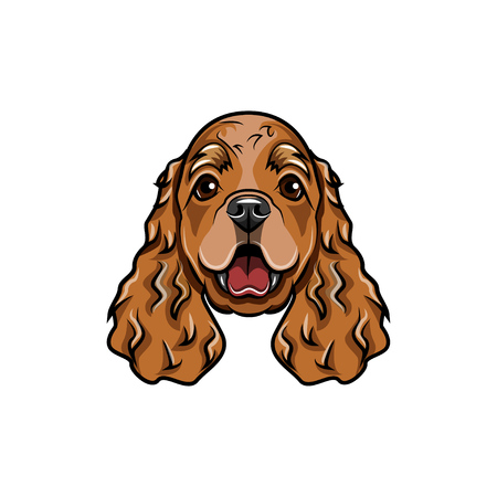 English cocker spaniel head. Vector illustration isolated on white background. Illustration
