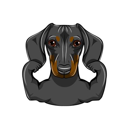 Portret van tekkelhond met muscules. Vector illustratie, geïsoleerd op een witte achtergrond. Stock Illustratie