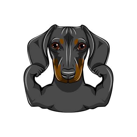 Portrait of dachshund dog with muscules. Vector illustration, isolated on white background.