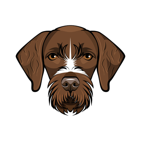 Hunting dog German wire-haired pointer. Vector illustration isolated on white background. 向量圖像