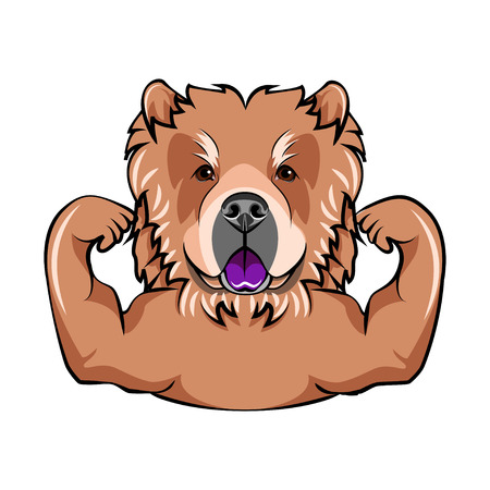 Chow chow dog with muscles. Vector Illustration. Isolated on white background.