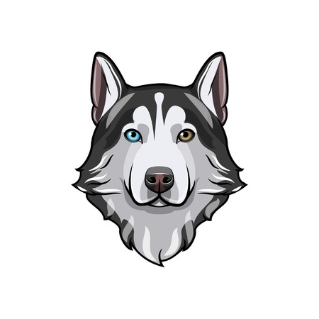 Husky dog portrait. Husky head. Dog breed. Vector illustration. Dog with different colored eyes. Siberian husky with multi-colored eyes. Çizim