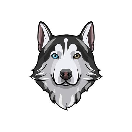 Husky dog portrait. Husky head. Dog breed. Vector illustration. Dog with different colored eyes. Siberian husky with multi-colored eyes. Stock Illustratie