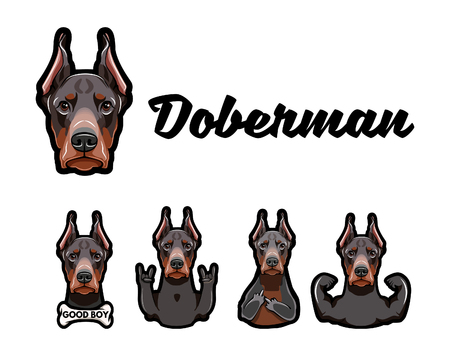 Doberman with gestures. Middle finger, Bone, Muscules, Rock gesture, Horns Dobermann dog Vector illustration
