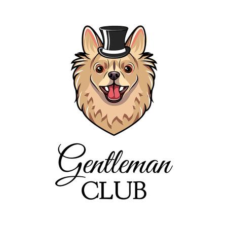Spitz gentleman. Dog wearing in top hat. Vector illustration. Gentleman club text.