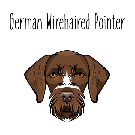German Wirehaired Pointer. Dog breed. Brown face of hunting dog. Vector Illustration. Dog Portrait. Иллюстрация