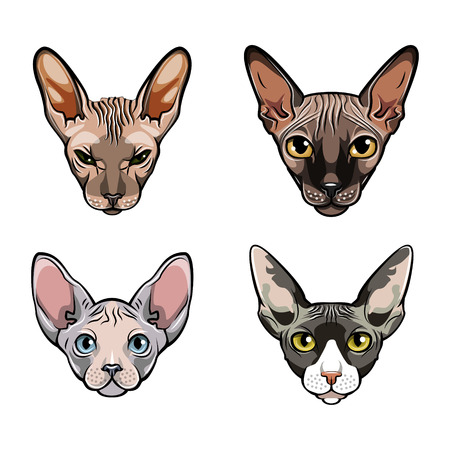 Sphinx cats set. Collection of exotic cats of breed a sphinx. Cat portrait. Vector illustration.