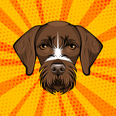 German Wirehaired Pointer. Hunting dog. Drachaar Dog breed. Brown face of hunting dog. Vector Illustration. Dog Portrait.