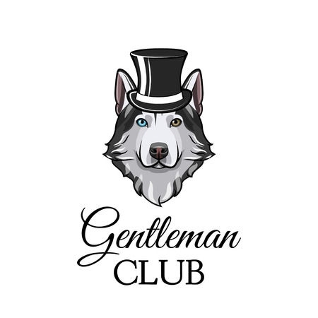 Siberian husky muzzled face with hat and Gentleman Club inscription.