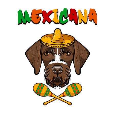 Germgan wirehaired pointer. Sombrero, maracas. Drahthaar. Hunting dog Vector illustration Mexicana Banque d'images - 98050137