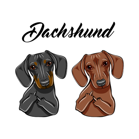 Brown and black Dachshunds with middle fingers.