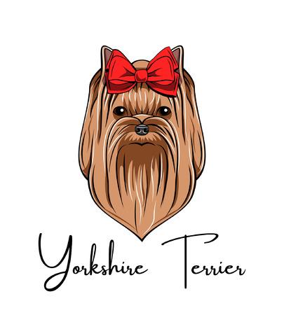 Yorkshire terrier portrait. Red Bow. Dog breed. Dog head face. Vector illustration Çizim