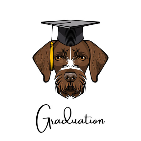German wirehaired pointer. Drahthaar graduate. Graduation hat. Vector illustration