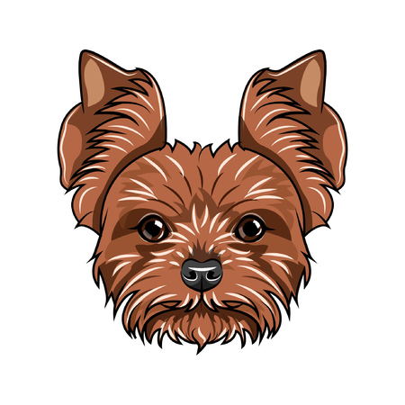 Yorkshire terrier head vector illustration.