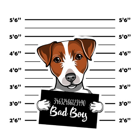 Jack Russell Terrier prisoner. Arrest photo. Police placard, Police mugshot, lineup. Police department banner. Dog. Vector illustration Zdjęcie Seryjne - 99687878