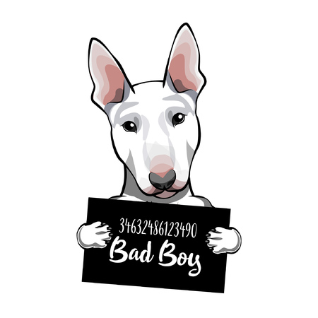 Bull Terrier criminal. Arrest photo. Photo offender Vector illustration