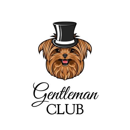 Yorkshire Terrier Gentleman. Top hat. Dog portrait. Gentleman club text. Vector illustration