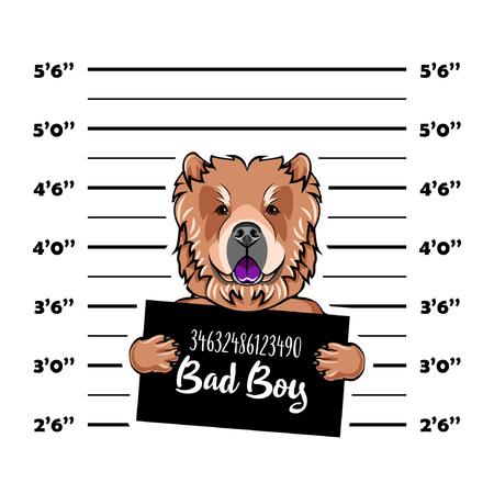 Chow chow dog. Prisoner, convict. Dog criminal. Police placard, Police mugshot, lineup. Arrest photo Mugshot photo Vector illustration Illustration
