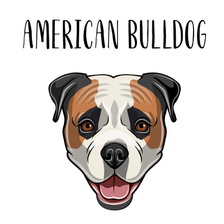 American Bulldog head. Dog portrait. American bulldog muzzle face. Dog breed. Vector illustration Ilustrace