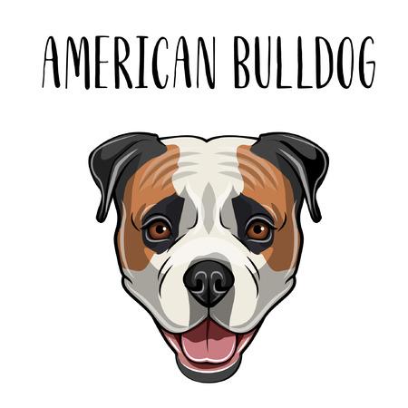 Cabeza de bulldog americano. Retrato de perro Cara de hocico de bulldog americano. Raza canina. Ilustración vectorial Ilustración de vector