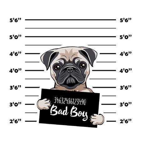 Pug prisoner. Arrest photo. Police placard, Police mugshot, lineup. Police department banner. Dog criminal. Pug offender Vector illustration