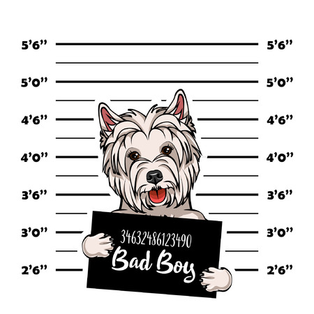 West Highland Terrier mugshot dog. Police banner. Arrest photo. Police placard, Police mugshot, lineup. Police department banner. Dog criminal. Dog offender. Vector illustration Vettoriali