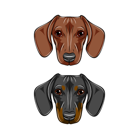 Two dachshunds, black, brown dog portrait. Dog breed, dog faces, muzzles heads Vector illustration.  イラスト・ベクター素材