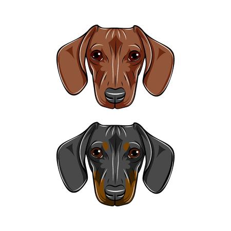 2つのダックスフント、黒、茶色の犬の肖像画。犬の品種、犬の顔、銃口の頭ベクトルイラスト。
