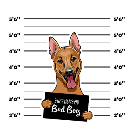 Duitse herder. Gevangene, veroordeelde. Hond crimineel. Politie plakkaat, politie mugshot, line-up. Arrestatie foto Mugshot foto Vector illustratie Stock Illustratie