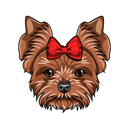 Yorkshire terrier portrait. Dog breed. Dog decorated with a bow on her head. Vector illustration