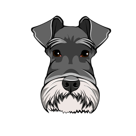 Schnauzer Dog Portrait. Dog head, face, muzzle. Dog breed Vector illustration