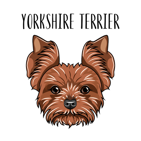 Yorkshire Terrier dog breed. Illustration