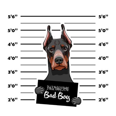 Ejemplo de Mugshot del perro criminal, con las letras del chico malo. Ilustración de vector