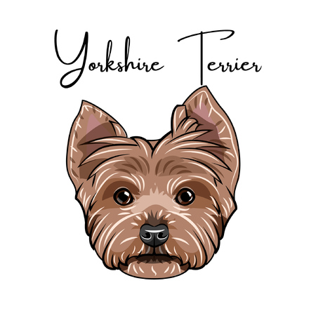 Yorkshire terrier portrait, dog head with Yorkshire terrier lettering.  イラスト・ベクター素材