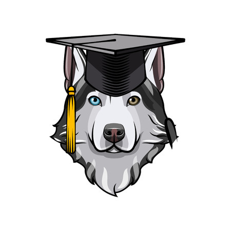 Siberian Husky wearing Graduation cap hat.