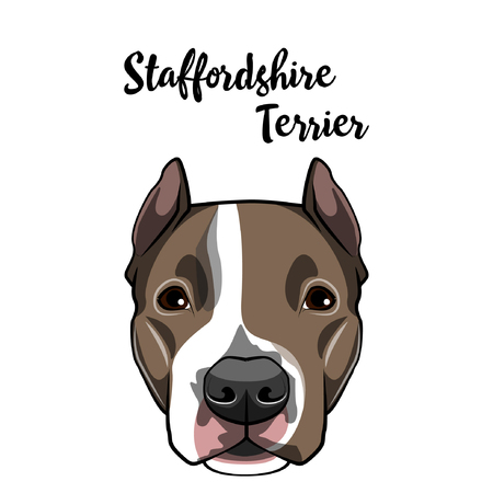 American Staffordshire Terrier dog face. Dog head muzzle. Dog breed. Vector illustration Illustration