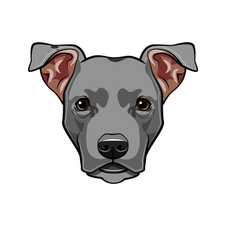 Staffordshire Terrier dog head. Dog breed. Dog portrait. Vector illustration