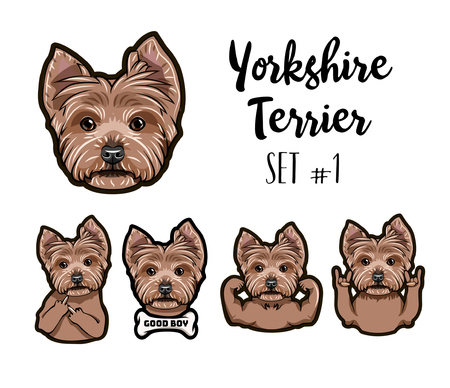 Yorkshire terrier dog icon with different gesture. Muscles, bone, middle finger, rock gesture, horns, dog muzzle vector illustration.