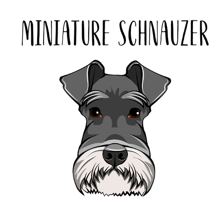 Dog Miniature Schnauzer breed. Dog portrait. Scnauzer muzzle. Vector illustration Ilustração