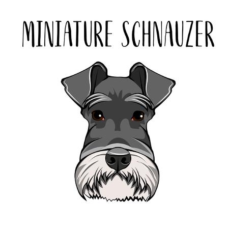 Dog Miniature Schnauzer breed. Dog portrait. Scnauzer muzzle. Vector illustration Illustration