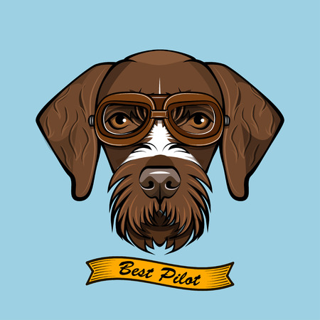 German Wirehaired Pointer dog Pilot with Aviator Glasses and Best pilot lettering.