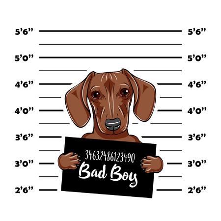 Dachshund Dog criminal. Police mugshot. Dog convict. Dog prison. Vector illustration