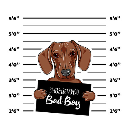 Dachshund Dog criminal. Police mugshot. Dog convict. Dog prison. Vector illustration