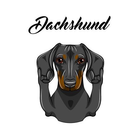 Dachshund dog, rock gesture. Dog portrait vector illustration heavy metal hand linear style. Stock Illustratie