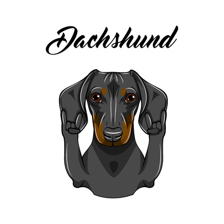 Dachshund dog, rock gesture. Dog portrait vector illustration heavy metal hand linear style. 矢量图像