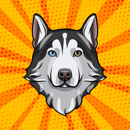 Siberian Husky head Dog portrait Dog breed Vector illustration