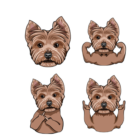 Yorkshire terrier dog collection vector illustration