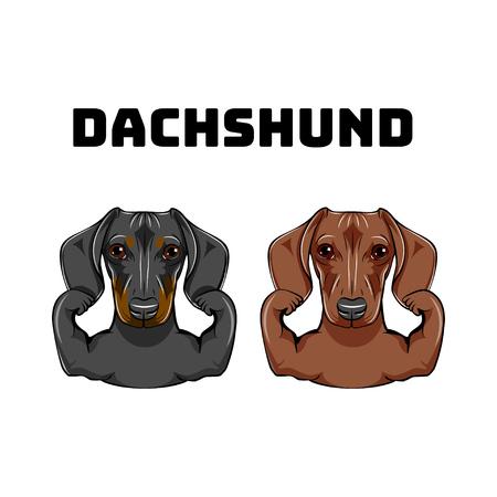 Dachshunds dog logo template vector illustration