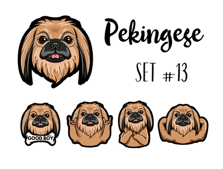 Pekingese dog. Gestures. Muscles, Bone, Middle finger, Horns, Muzzle, Head. Dog portrait. Vector illustration